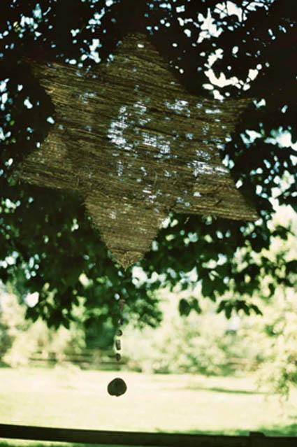 grass-star-web