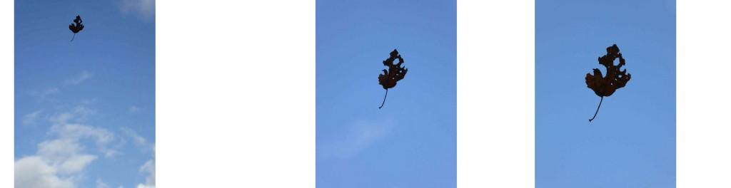 leaf-drop1